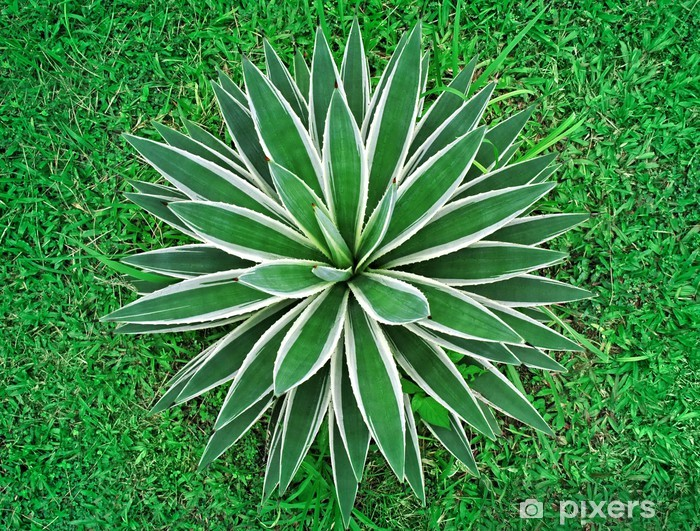 tropical plant top view Pixerstick Sticker - Agriculture
