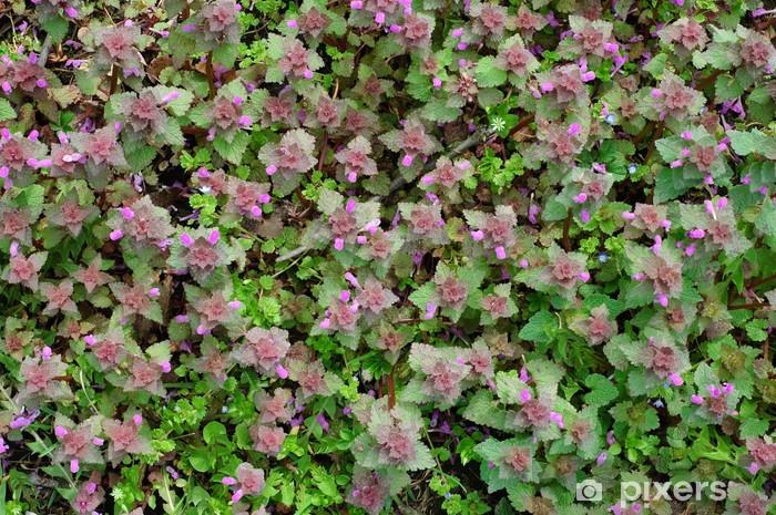 Papier peint vinyle Tapis vert de printemps - Plantes