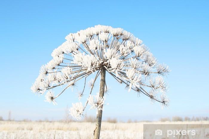 Papier peint vinyle Plante sèche enneigée en hiver. - Saisons