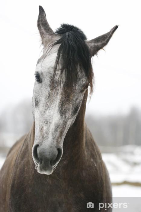 Vinilo para Nevera Arabian stallion - Temas