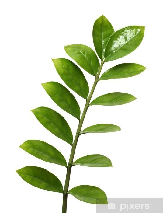 Papier peint vinyle Branche avec des feuilles vertes - Paix