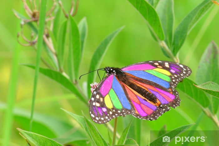 Sticker Pixerstick Rainbow butterfly - Saisons
