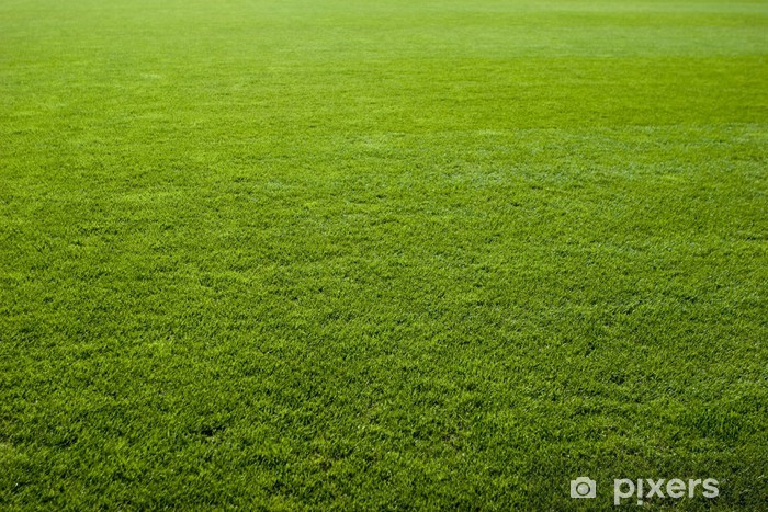 Green Grass Texture Of A Soccer Field Wall Mural Pixers
