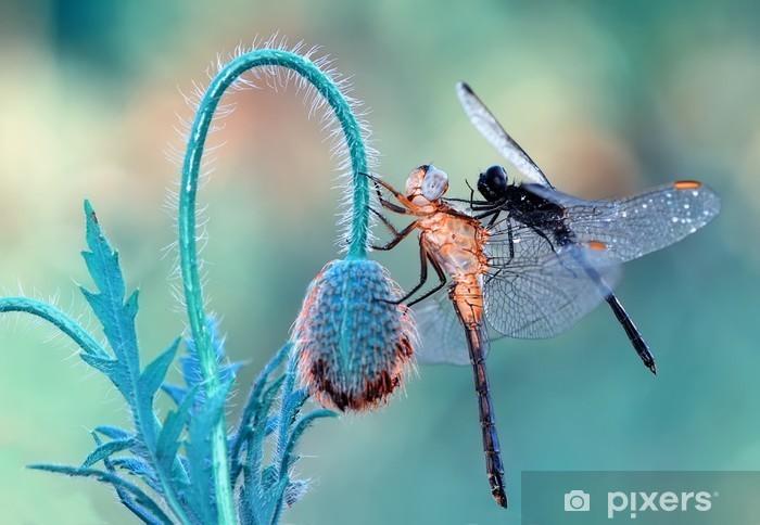 dragonfly Vinyl Wall Mural - Animals