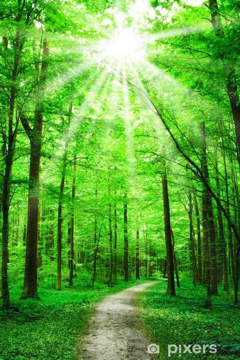 Fototapet av Vinyl Natur. stig i skogen med solsken - Teman