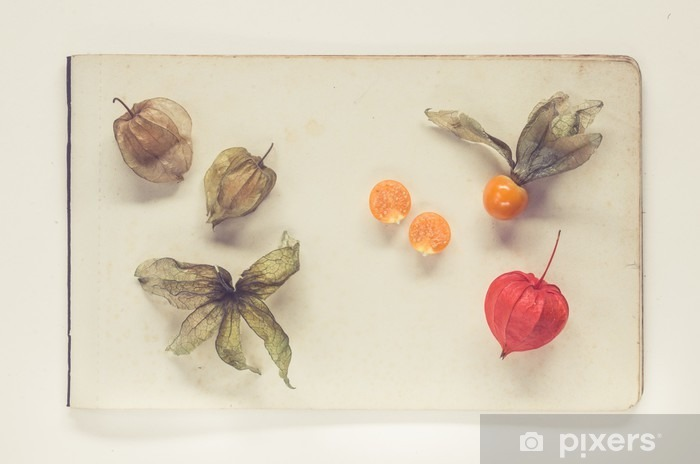 physalis lying on sheets of vintage paper - natural history book style Vinyl Wall Mural - Food