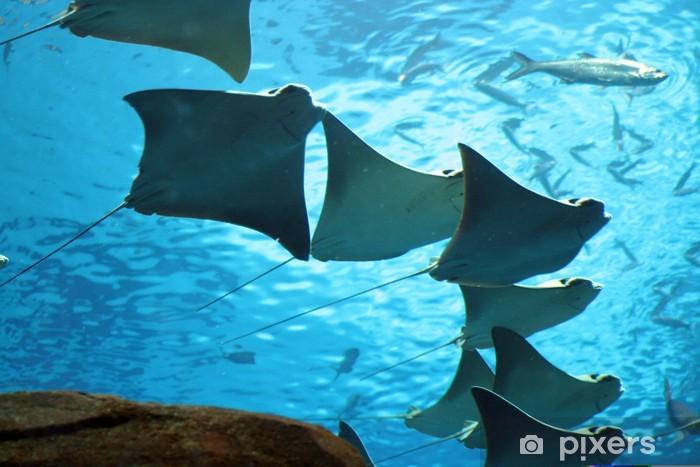 Naklejka Pixerstick Płaszczka - Zwierzęta żyjące pod wodą