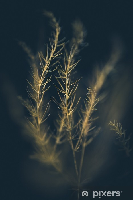 Sunlit Grass Pixerstick Sticker - Plants and Flowers