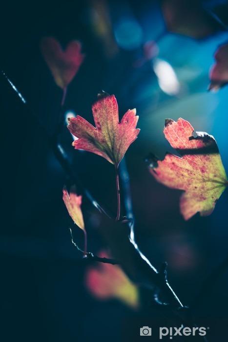 Fototapeta winylowa Jesienne liście w słońcu - Rośliny i kwiaty