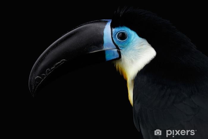 Zelfklevend Fotobehang Close-up, channel-billed, toekan, ramphastos, vitellinus, verticaal, van, vogel, met, groot, bek, geïsoleerde, op, zwarte achtergrond - Dieren