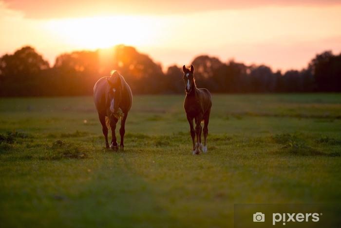 Afwasbaar Fotobehang Moeder paard met veulen op landbouwgrond bij zonsondergang. Geesteren. achter - Dieren