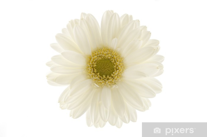Nálepka Pixerstick Dlouhý záběr z bílé gerbery - Stromy