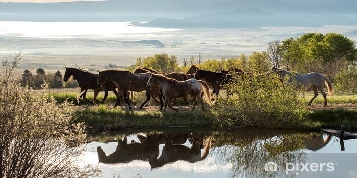 Zelfklevend Fotobehang Colorado paarden - Levensstijl