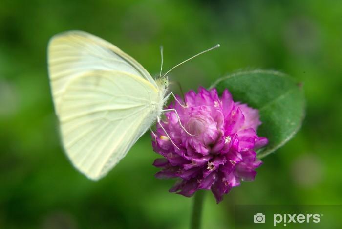 Naklejka Pixerstick Motyl na purpurowy kwiat - Tematy