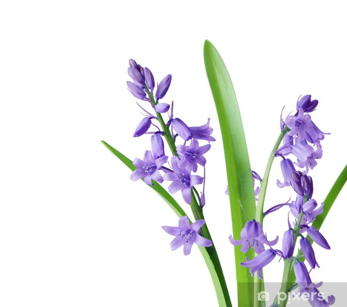 bluebells Pixerstick Sticker - Flowers