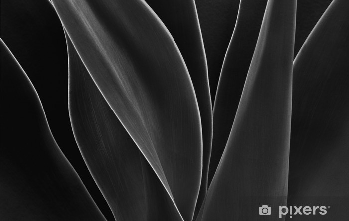 Afwasbaar Fotobehang Dancing Agave - Bloemen en Planten