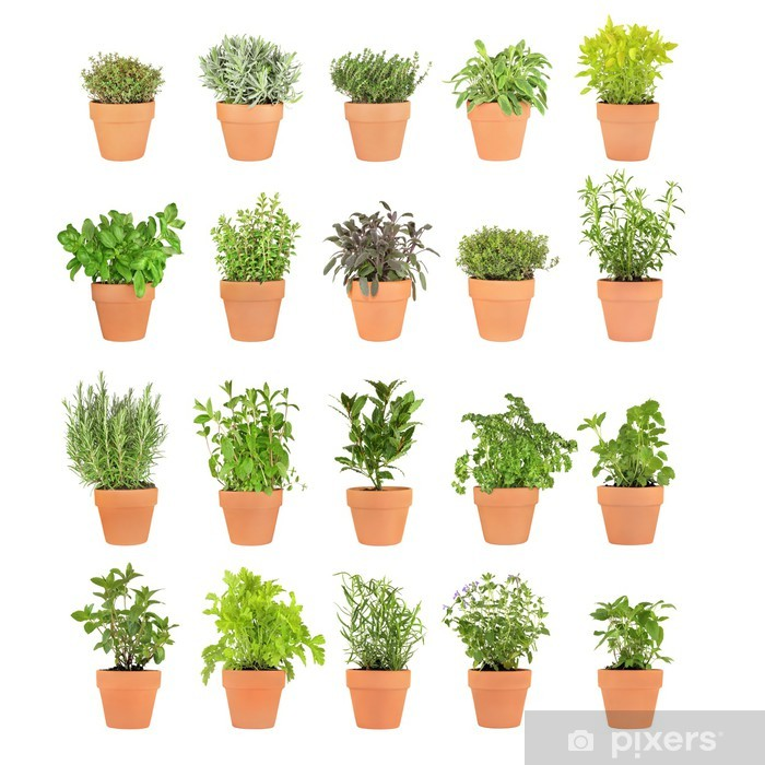 Herbs in Pots Vinyl Wall Mural - Herbs