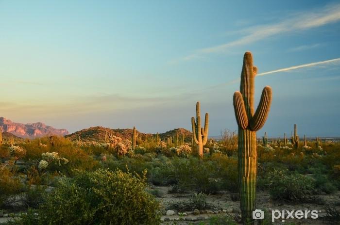 Fototapeta samoprzylepna Kaktus - Rośliny i kwiaty