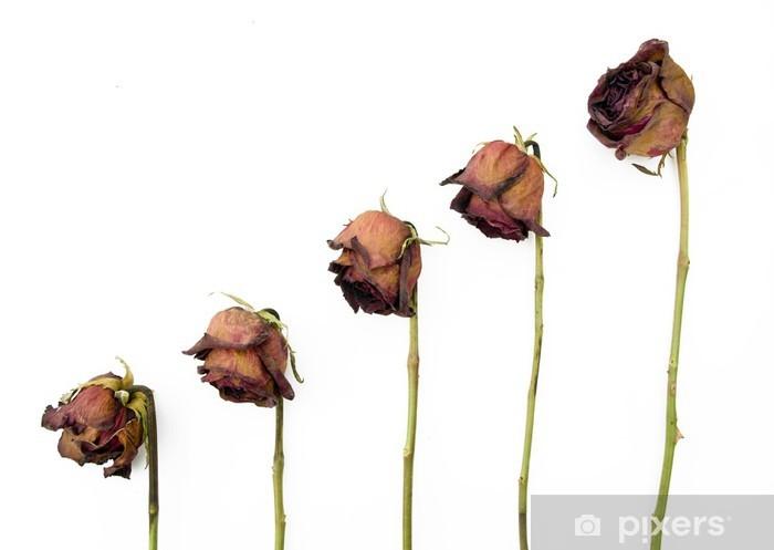 Fototapeta Winylowa Wiersz 5 Starych Suszone Czerwone Róże Na Ciemnym Tle