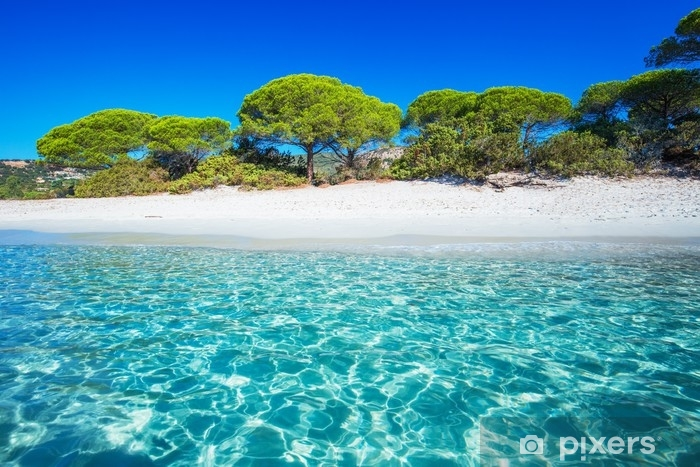 Sandy Palombaggia Beach With Pine Trees And Azure Clear Water Corsica France Europe Wall Mural Vinyl