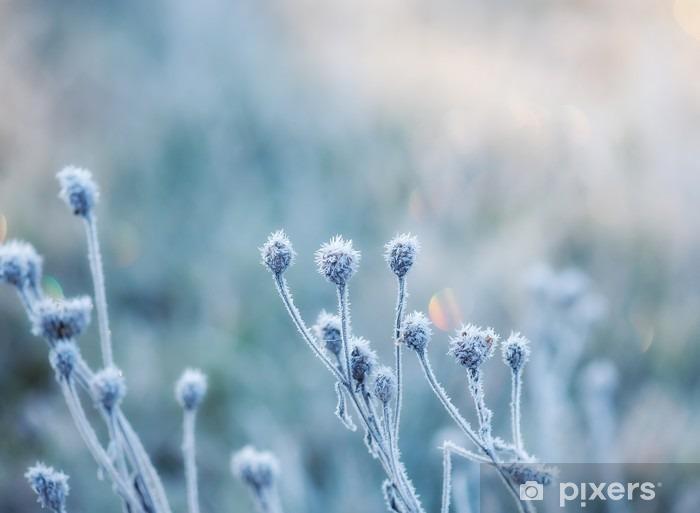 Pixerstick Sticker Abstracte natuurlijke achtergrond van bevroren planten bedekt met rijp of rijp - Landschappen