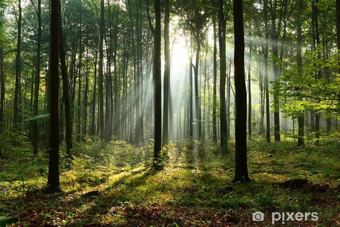 Fototapeta samoprzylepna Rano w lesie - Krajobrazy