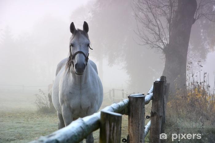 Fototapeta winylowa Koń w porannej jesieni krajobraz - Krajobrazy
