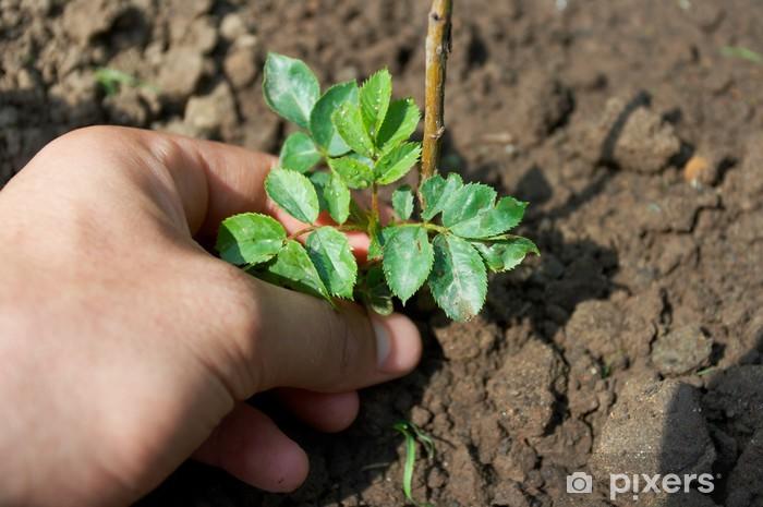 Naklejka Pixerstick Roślin w ziemi - Rolnictwo