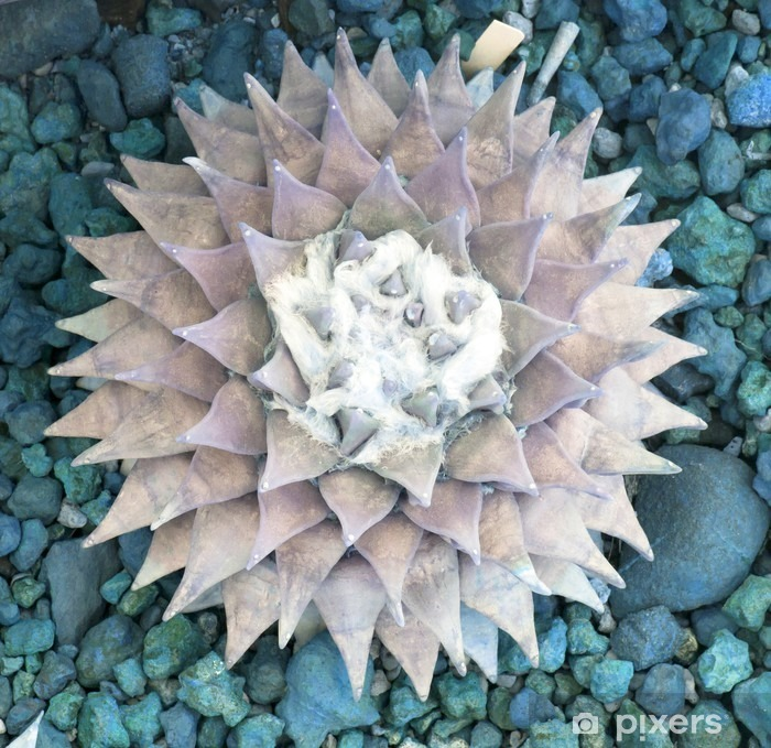 Sticker Pixerstick La surface de diamant de l'étang - Plantes et fleurs
