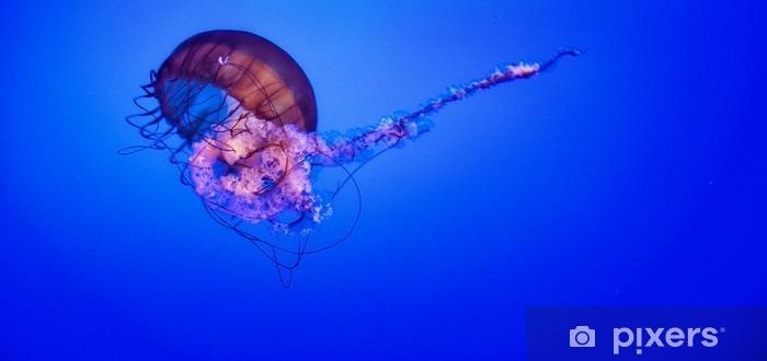 Jellyfish Vinyl Wall Mural - Animals