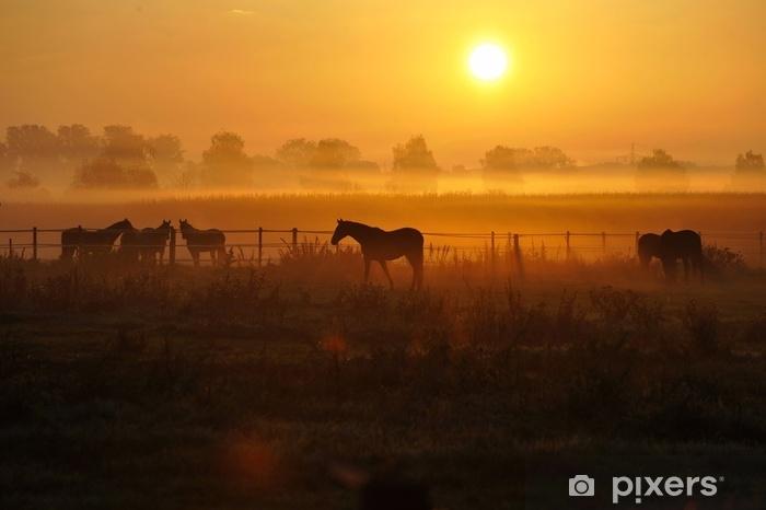 Zelfklevend Fotobehang Sonnenaufgang auf einer pferdeweide - Dieren