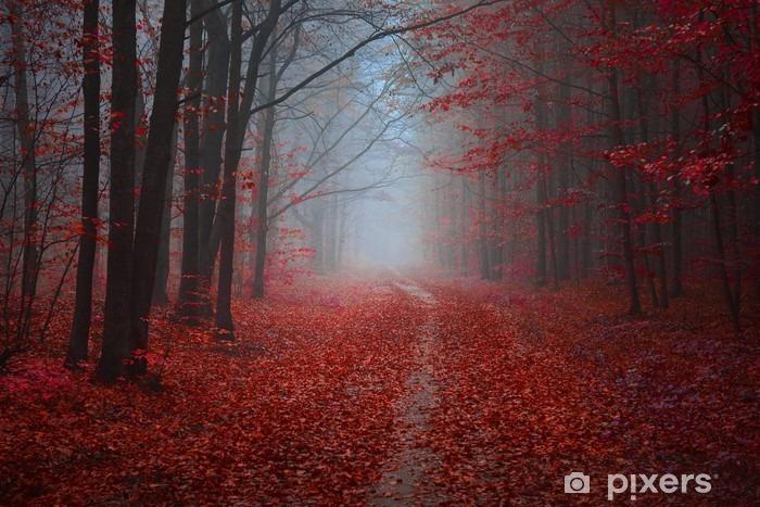 Fototapeta winylowa Las - Krajobrazy