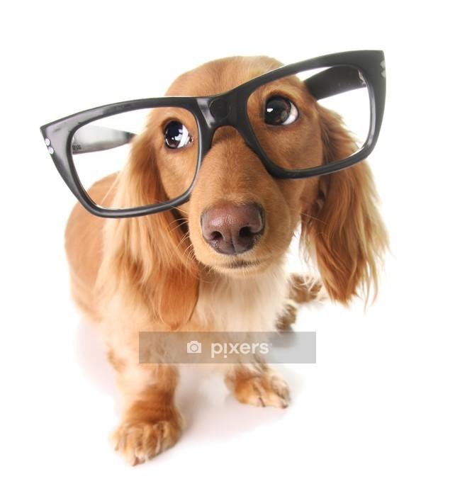Vinilo para Pared Inteligente perrito - Vinilo para pared