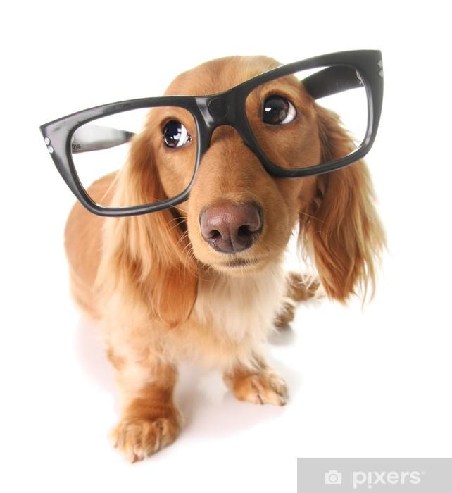 Smart puppy Pixerstick Sticker - Wall decals