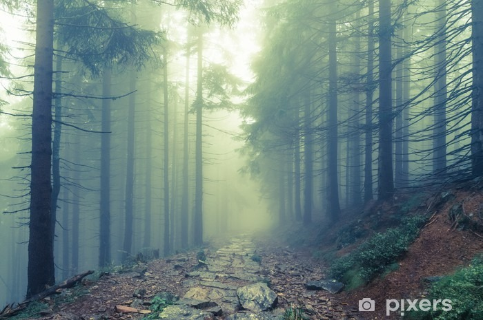 Fog in the haunted forest Pixerstick Sticker - Landscapes
