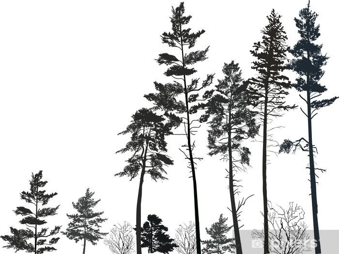 Fototapeta winylowa Wysoki las sosnowy czarne sylwetki na białym - Rośliny i kwiaty