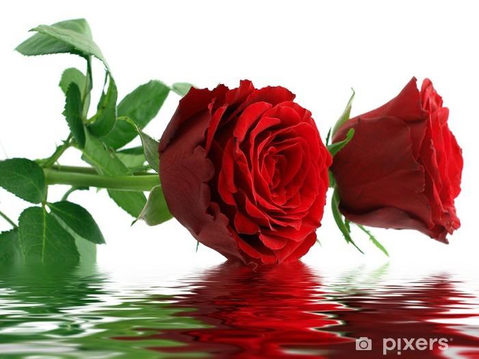 Papier peint vinyle Deux roses rouges - Bonheur