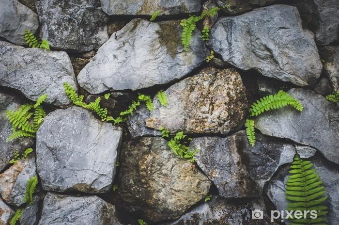 Fotomural Autoadhesivo Muro de piedra con planta de la naturaleza - Hobbies y entretenimiento