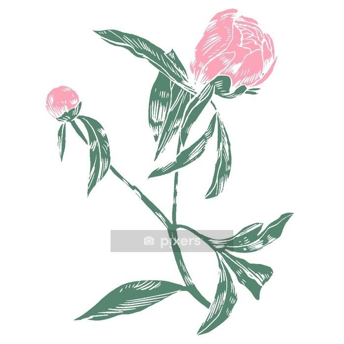 Naklejka na ścianę Ręcznie rysunek piwonie. Wektor graficznych kwiatów. Dekoracyjne tła dla karty, zaproszenia. Szablon kartkę z życzeniami. - Rośliny i kwiaty