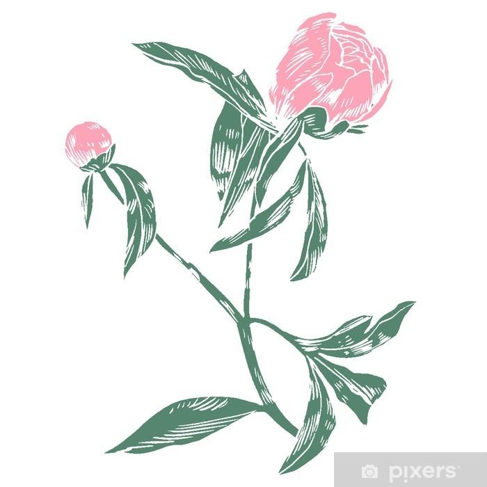 Fotomural Estándar Peonías dibujo a mano. flores gráficos vectoriales. fondo decorativo para las tarjetas, las invitaciones. tarjeta de felicitación de la plantilla. - Plantas y flores