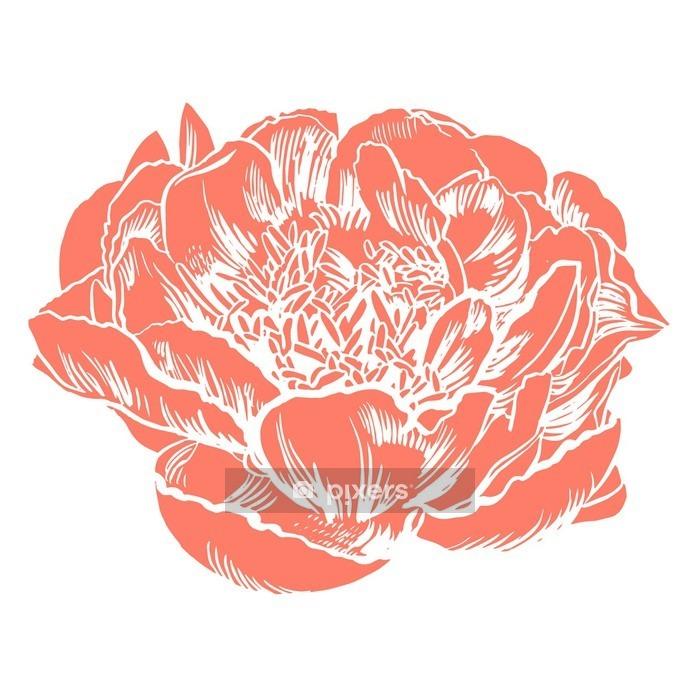 Käsin piirustus peonies. vektori graafisia kukkia. koristeellinen tausta kortteja, kutsut. mallin tervehdyskortti. Seinätarra - Kasvit Ja Kukat