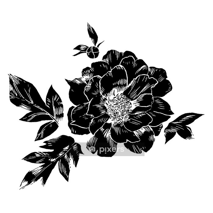 Hand-drawing peonies. Vector graphic flowers. Decorative background for cards, invitations. Template greeting card. Wall Decal - Plants and Flowers
