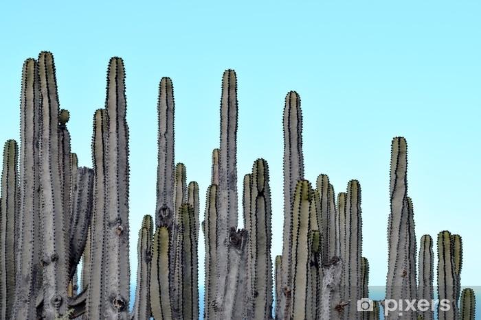 Sticker Pixerstick Photographie couleur cactus - Plantes et fleurs