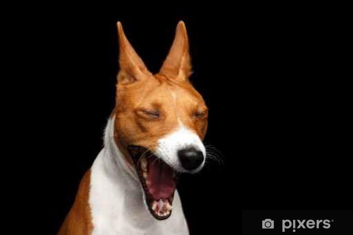 Sticker Close-up drôle Portrait Blanc avec Red Basenji Dog ...
