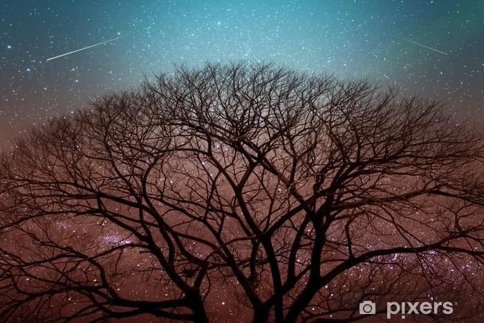 Fototapet av Vinyl Mörk kontur av torrt träd på natten med stjärnhimmel på backgro - Landskap