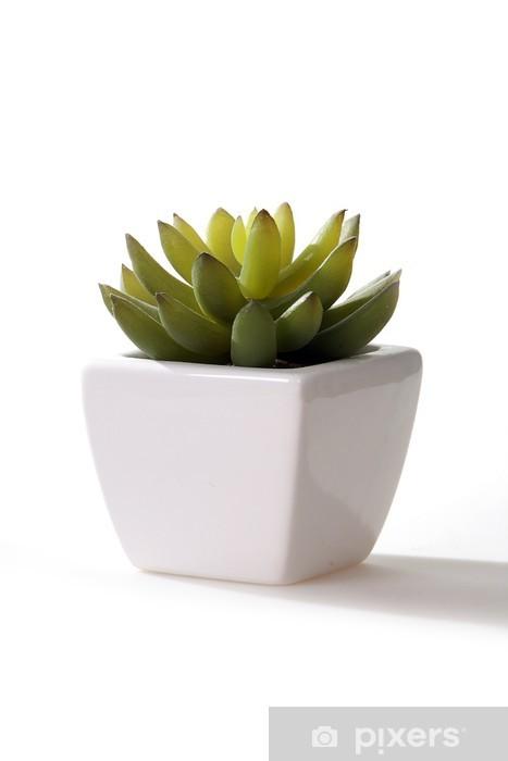 Vinyl-Fototapete Kaktus - Pflanzen