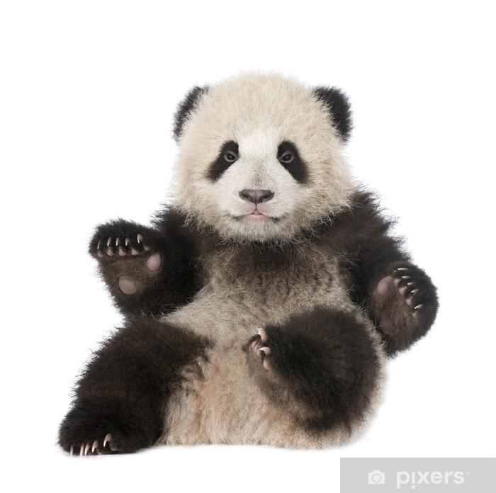 Poster Giant Panda (6 mois) - Ailuropoda melanoleuca - Sticker mural