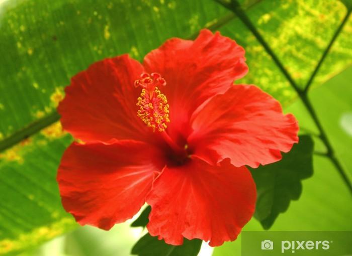 Fleur rouge tropicale - pivoine etc