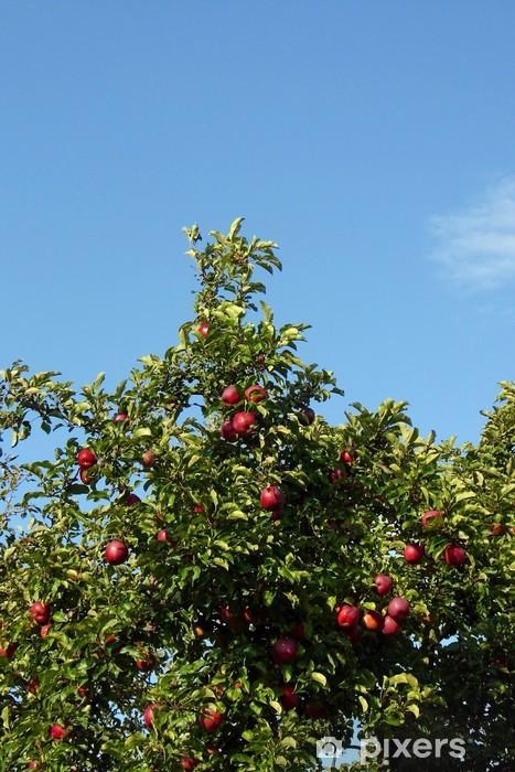 Fototapeta winylowa Jabłoń - Drzewa