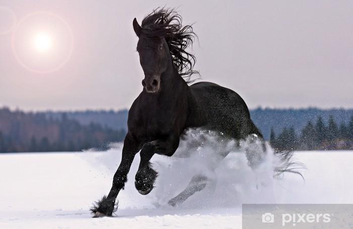 Carta da Parati in Vinile Frisone cavallo sulla neve - Temi